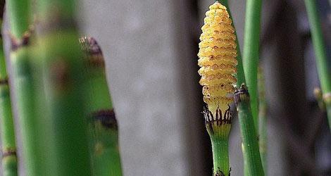 Zayıflatan bitkilerle doğal zayıflam a ve zayıflamaya yardımcı