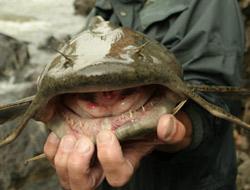 Dünyanın en korkunç balığı video yazan samiavci dünyanın en